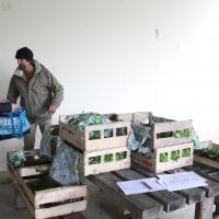 AMAP Pres d'ici  Fontenay le Comte - Légumes - Bio panier